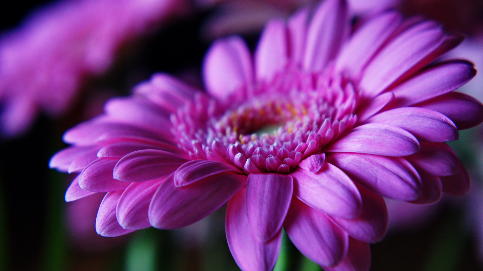 Photograph flowers by Hiwa  on 500px