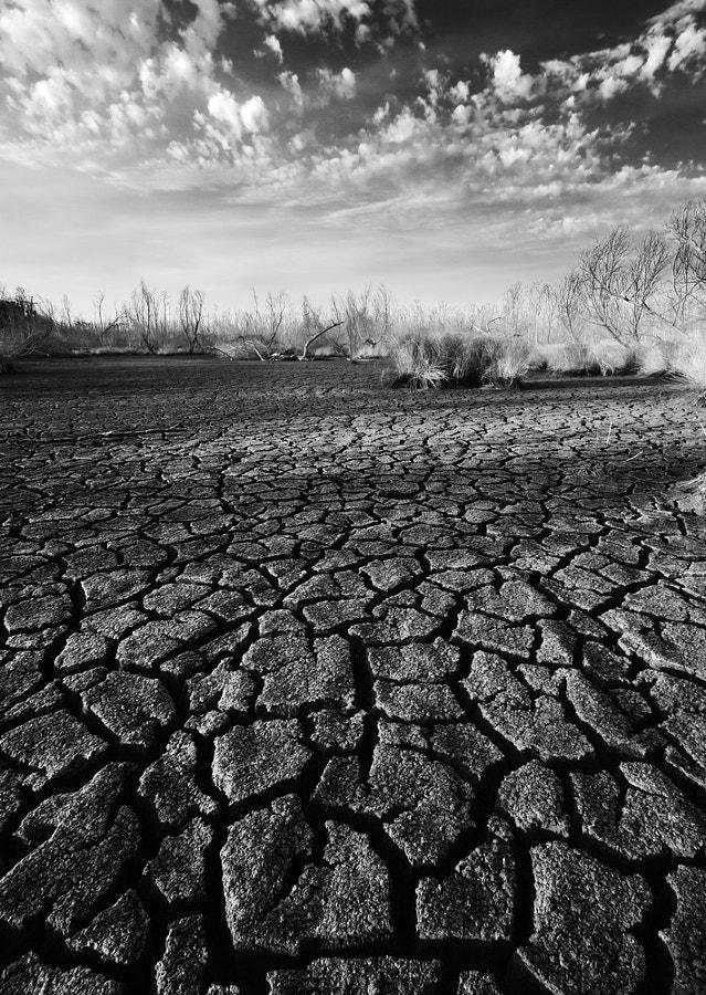 Bayou Drought