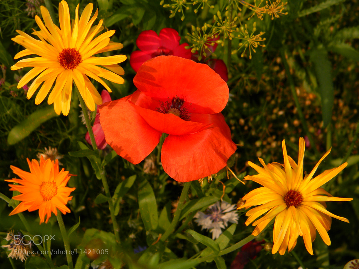 Photograph Flowers by Anna Todorova on 500px