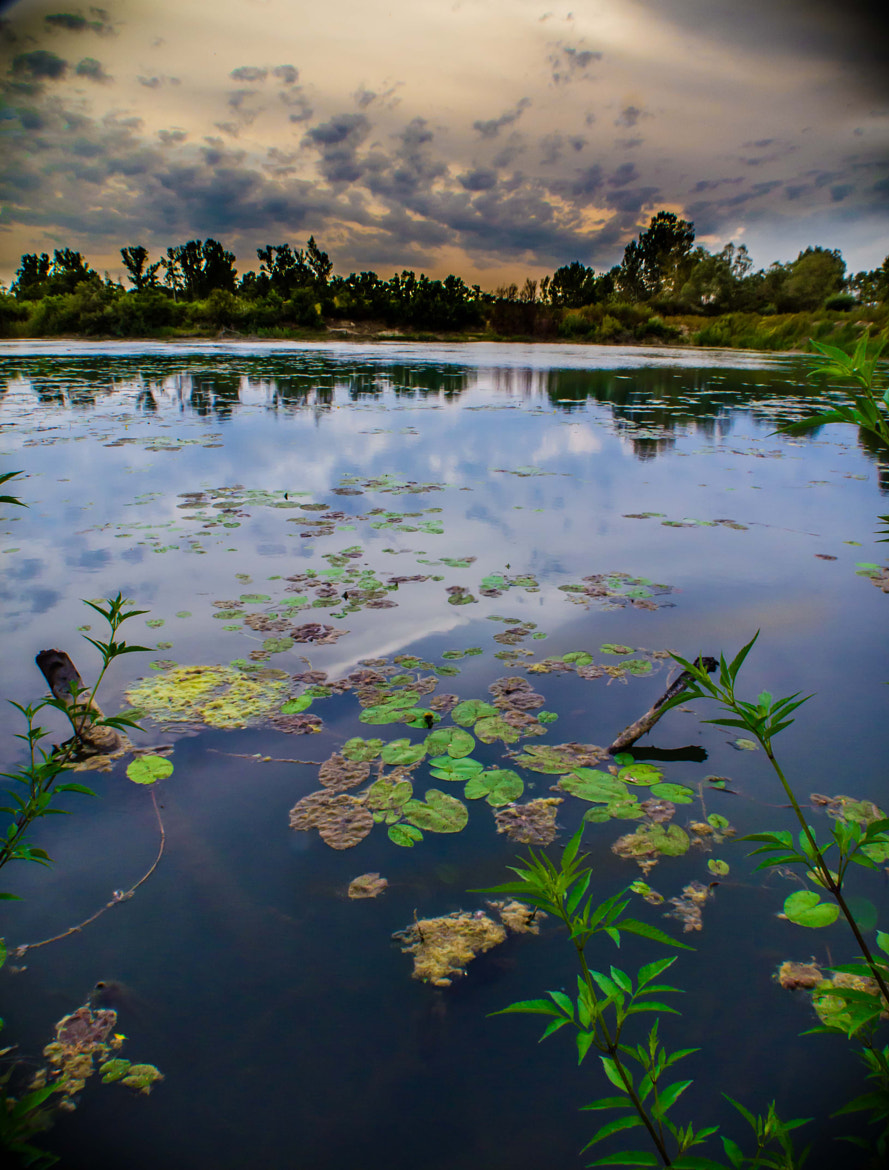 Photograph The Swamp sunset by Eddie MacGraw on 500px
