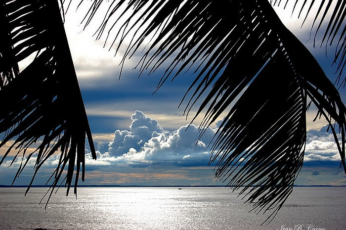 Photograph Palm leaves on a clear day. by Ivan B. Carmo on 500px