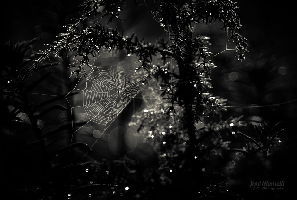 Photograph White Web by Joni Niemelä on 500px