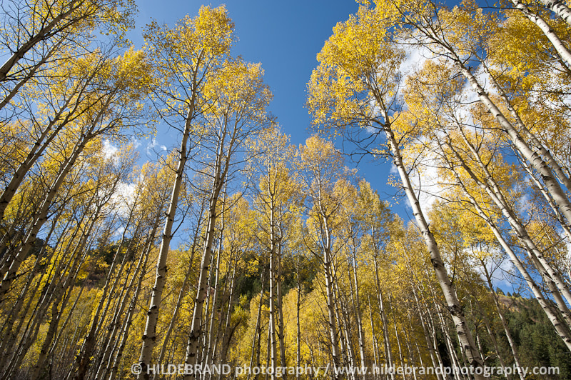 Photograph Aspen Grove by Frank Hildebrand / HILDEBRAND photography on 500px