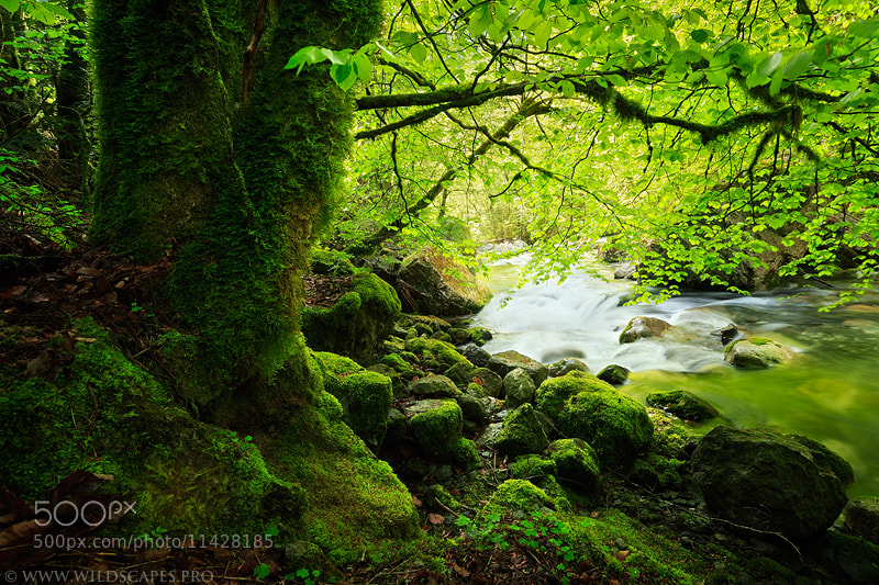 Photograph Green Riverside by Maxime Courty on 500px