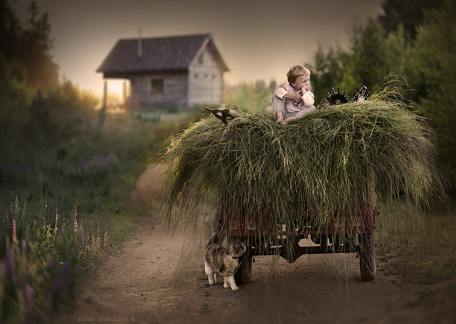 сенокос.. by Elena Shumilova on 500px.com