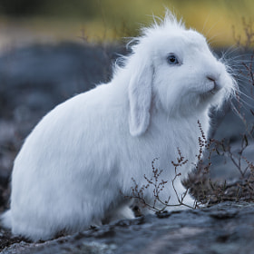 White Rabbit by Andreas Lyng (AndreasLyng)) on 500px.com