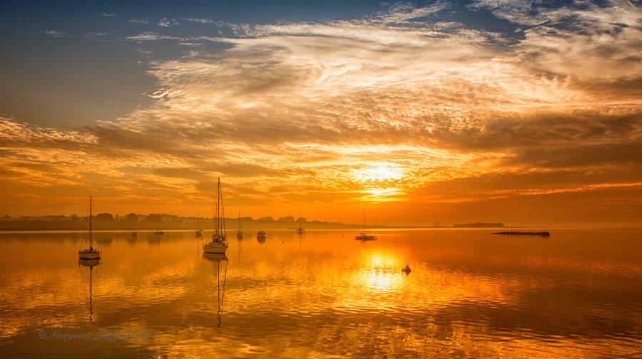 Liquid Gold by Margaret Morgan on 500px