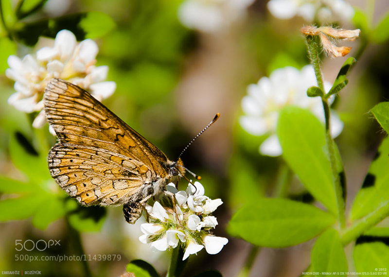 Photograph Nymphalidae by Emrah Oz on 500px