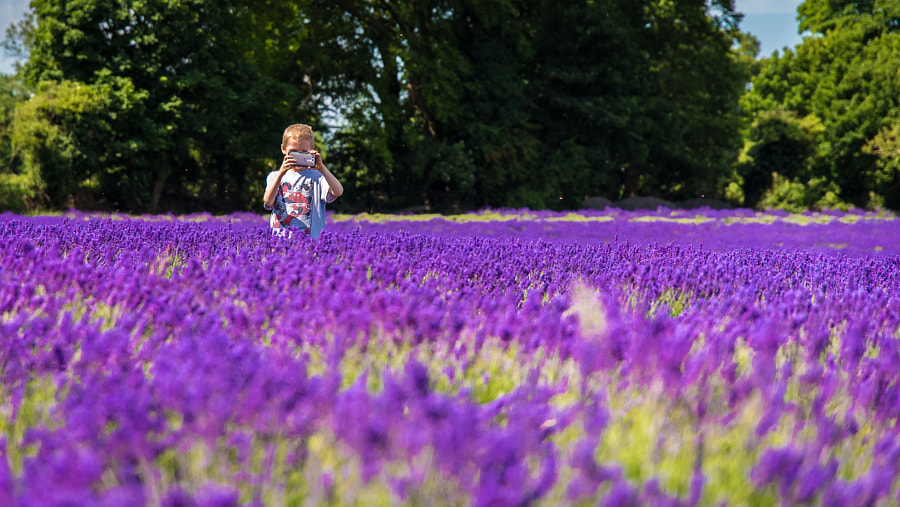 __A boy taking a photo in lavender__