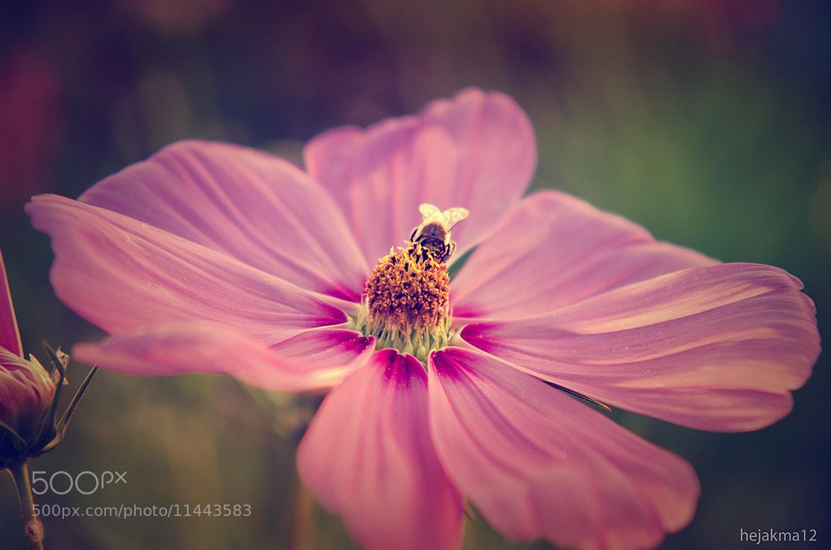 Photograph Last days of summer by hejakma  . on 500px