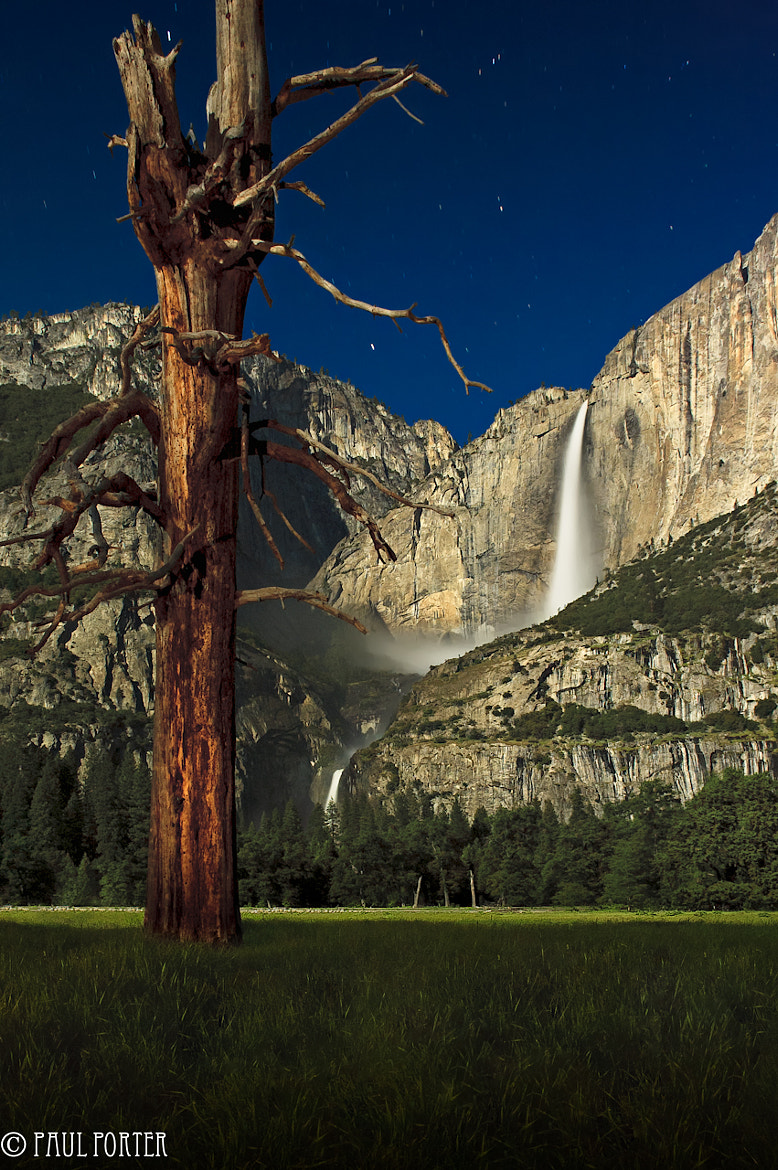 Photograph Dead Tree, Cooks Meadow, Yosemite Falls by Paul Porter on 500px