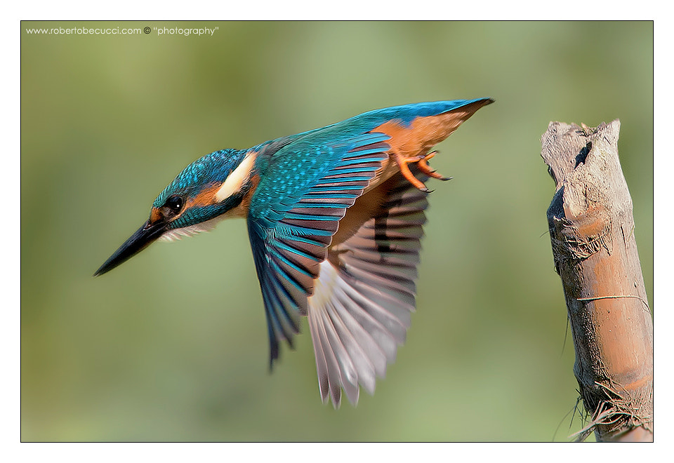 Photograph Diving..! by Roberto Becucci on 500px