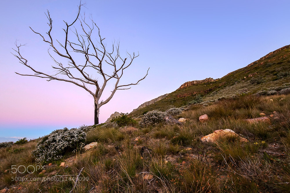 Photograph Tree of wonders by Juan Wernecke on 500px