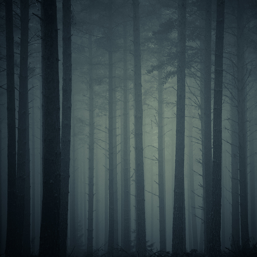 Photograph The Pine Forest by Anders Naesset on 500px