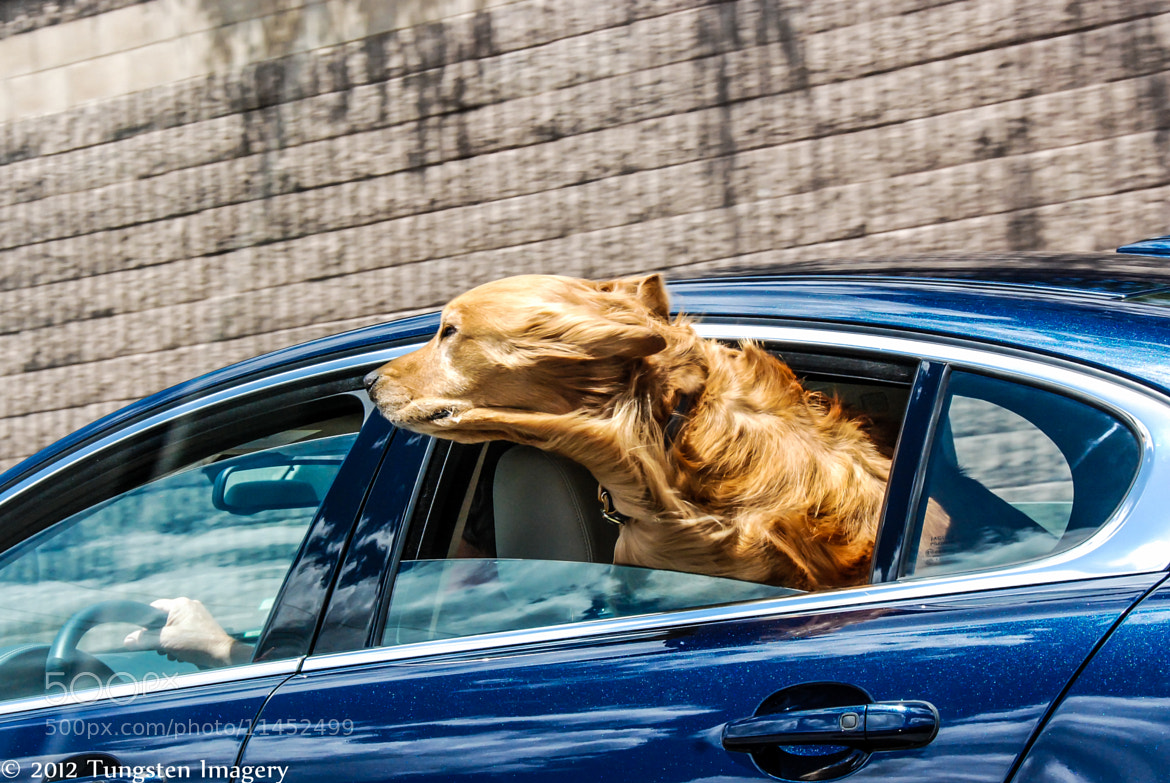 Photograph Man's Best Friend by Spencer Le on 500px