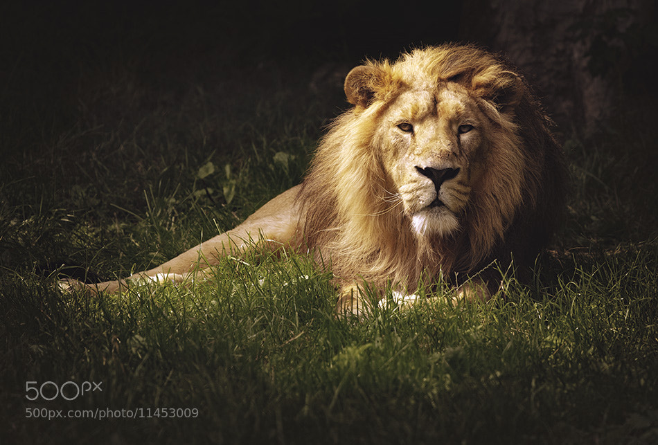 Photograph The King At Rest by Scott Fisher on 500px