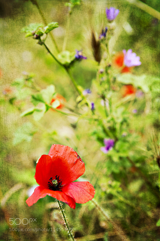 Photograph Summer flowers by Larissa Beniaminova on 500px
