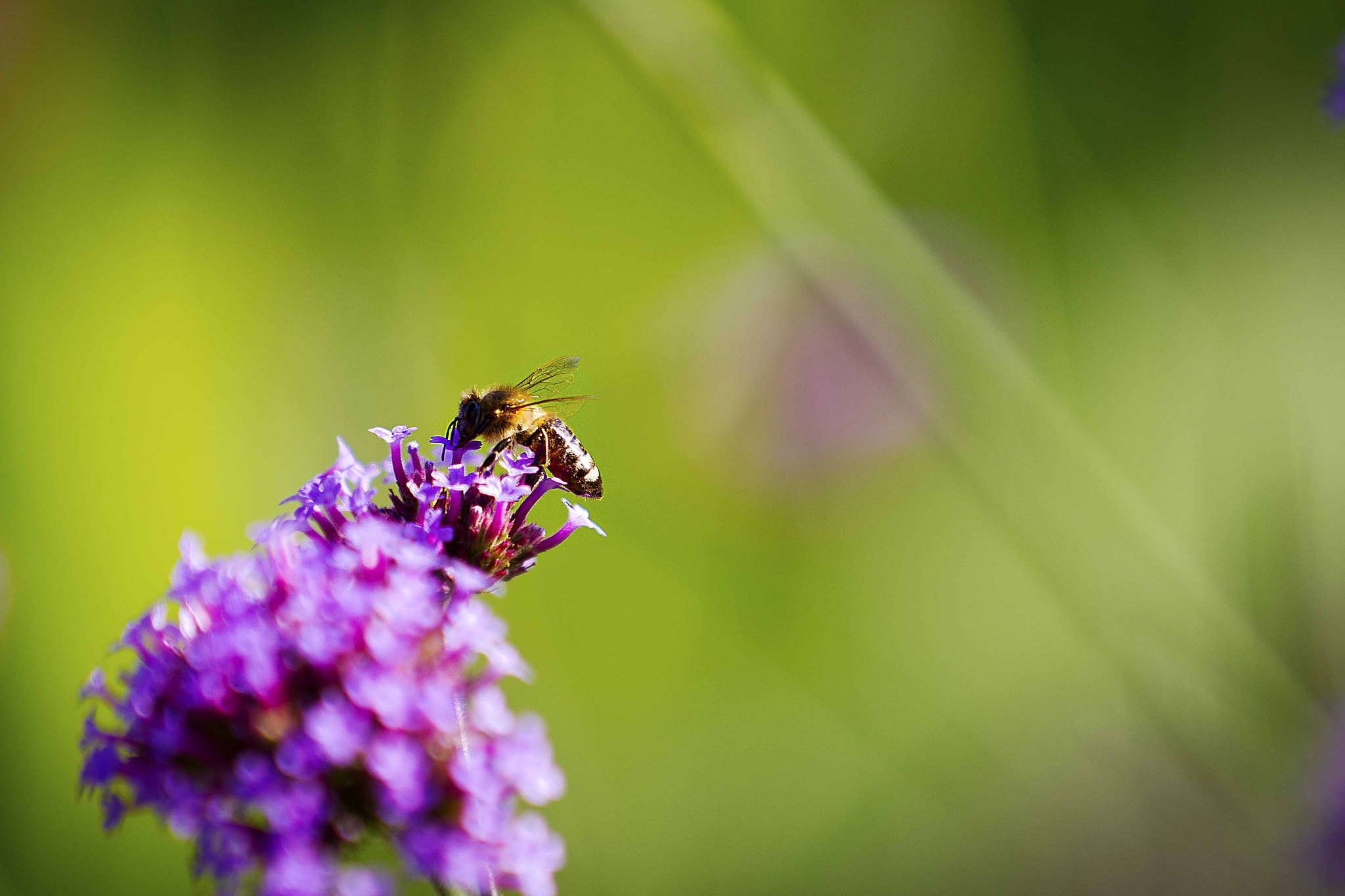 Photograph Just Bee by Joseph C on 500px