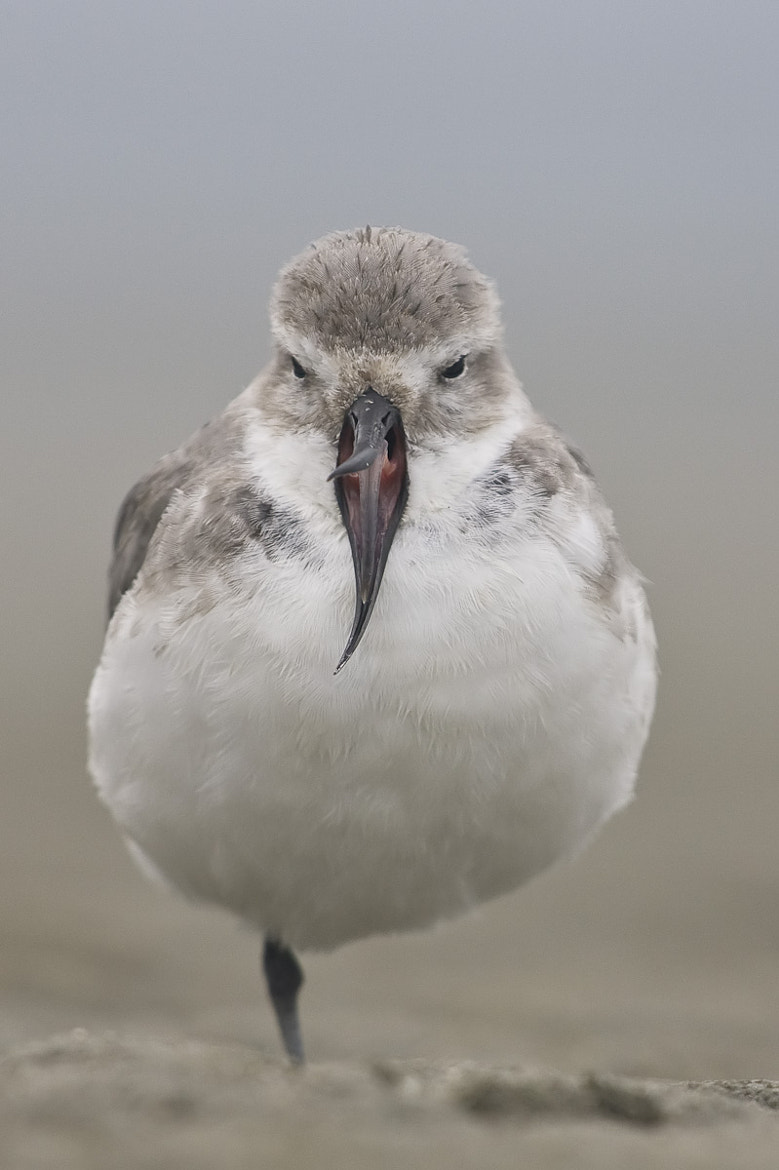 Photograph Wrybill by Craig Nash on 500px