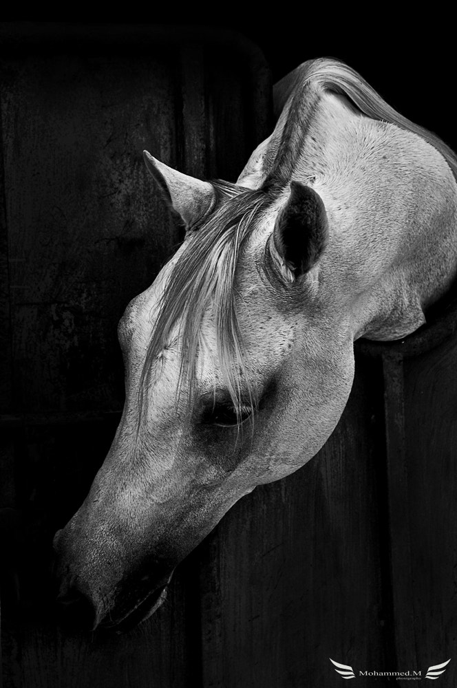 Photograph Horse by Mohammed Janbi on 500px