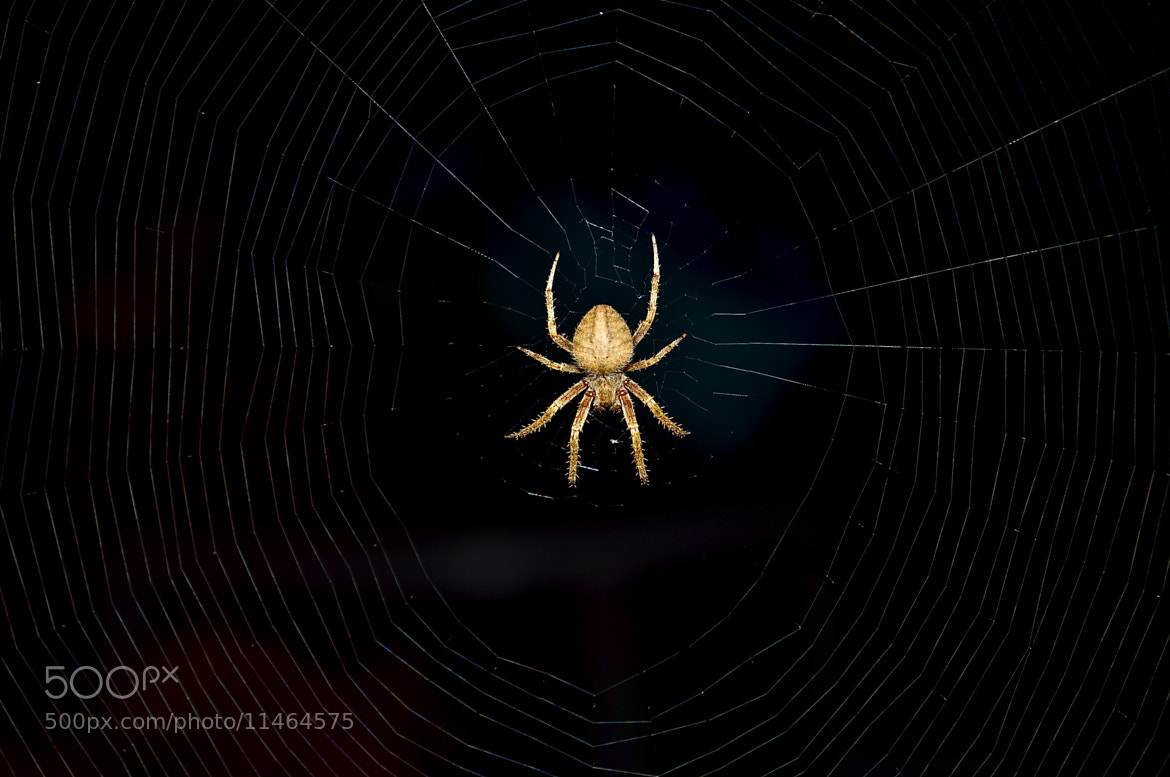Photograph spider 2 by Tim Seymour on 500px