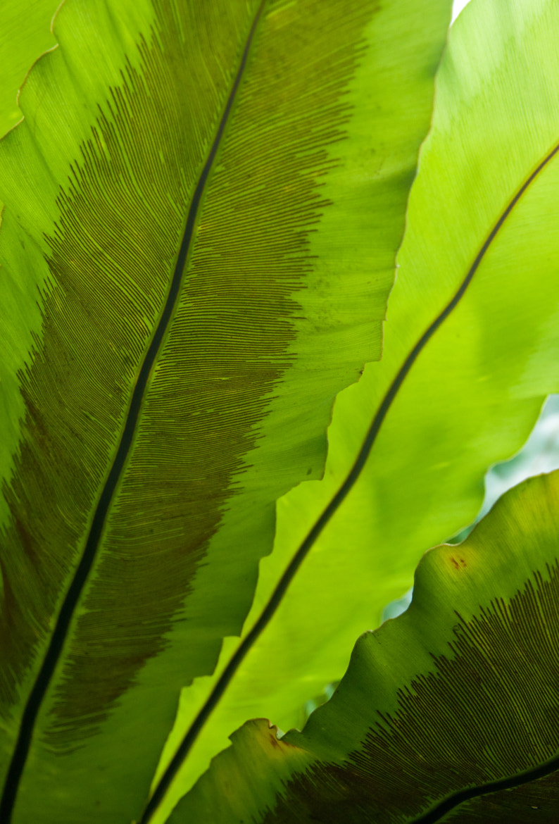 Photograph Huge leaves by Roman Rusavsky on 500px