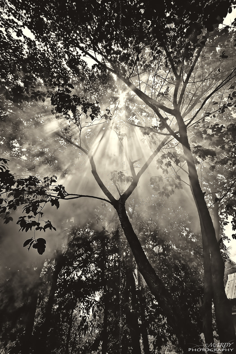 Photograph Sun Beam With Sepia Tone! by Mardy Suong Photography on 500px