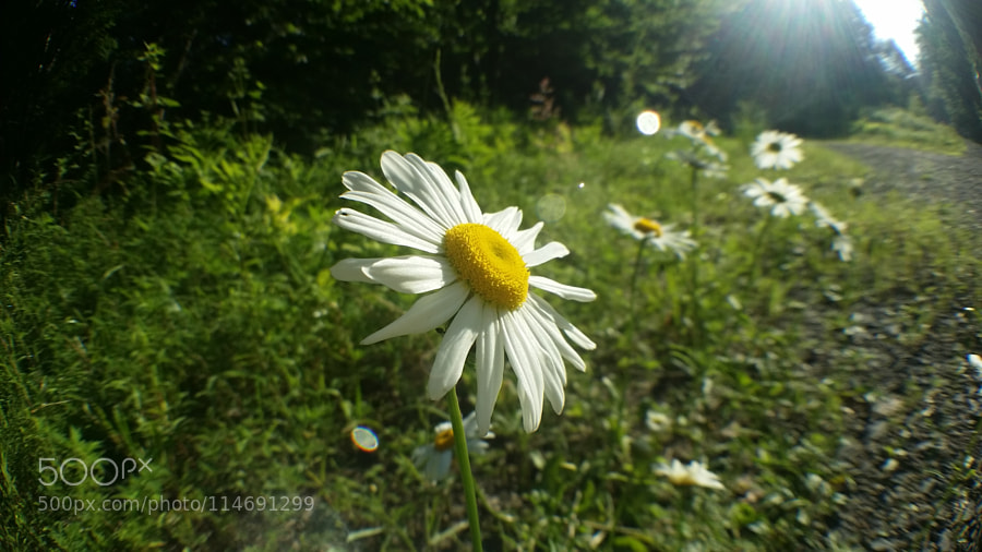 Fisheye Flower