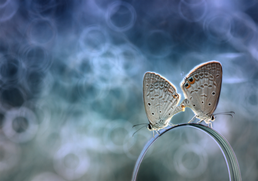 Photograph when love blossomed by Angga Ra Putra on 500px