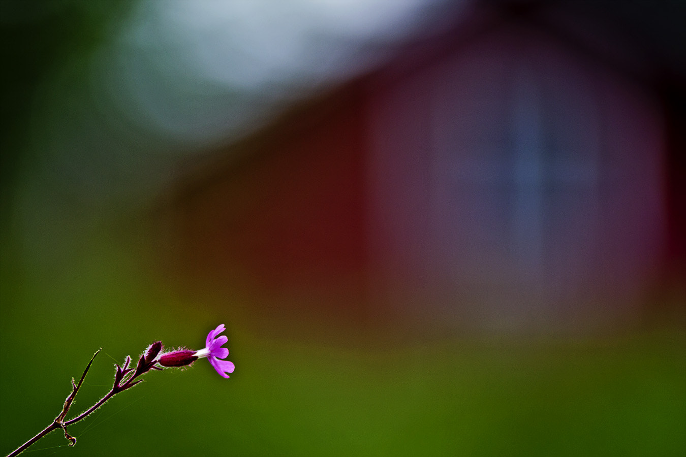 Photograph Bokeh by Magnus Lögdberg on 500px