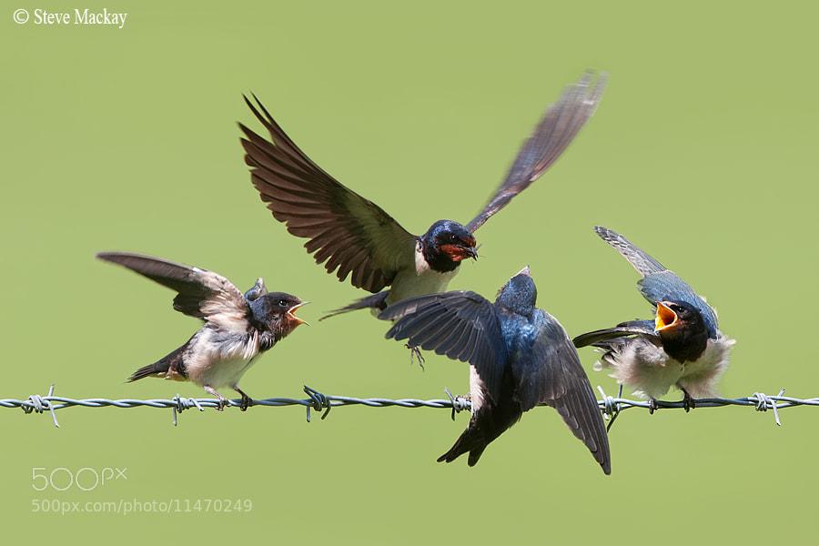 Photograph Choices! by Steve Mackay on 500px