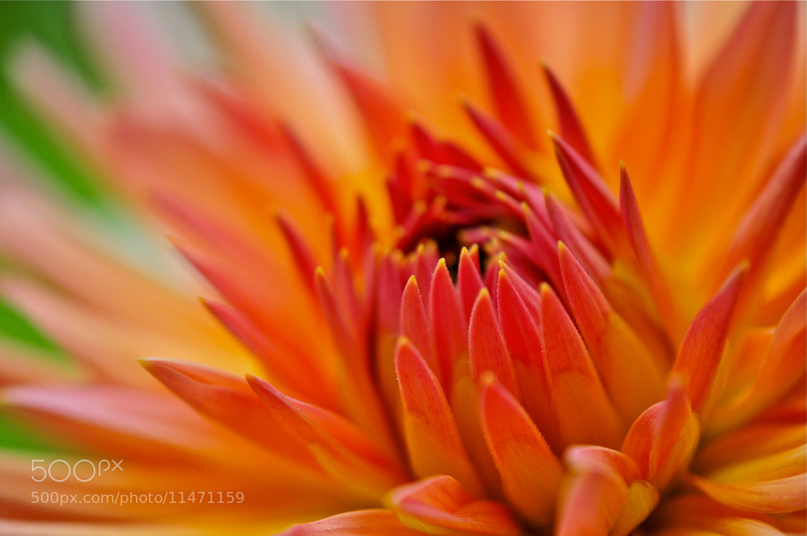 Photograph Soft Beauty by Hermes S on 500px