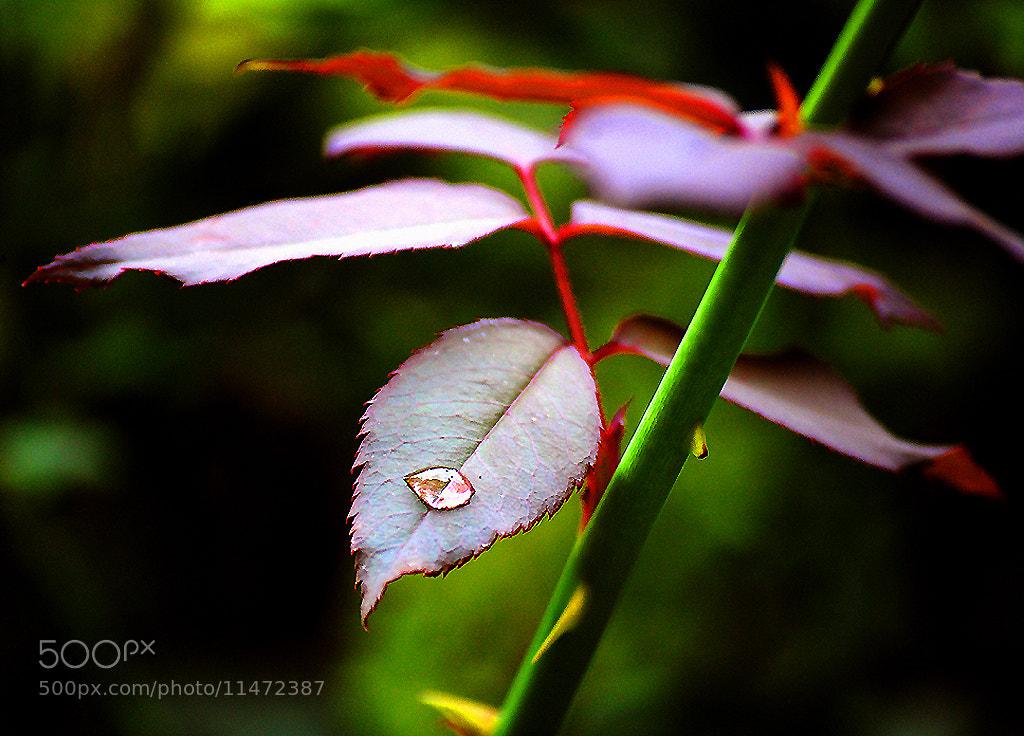 Photograph Simplicity by Motiur Rahman on 500px
