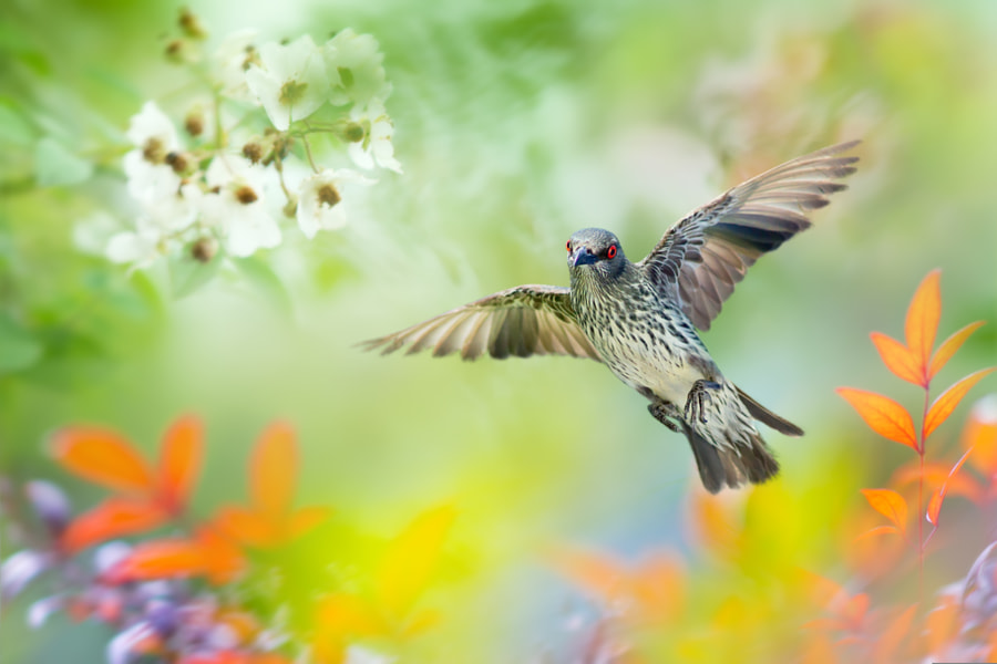 Soar To Great Heights by FuYi Chen on 500px.com