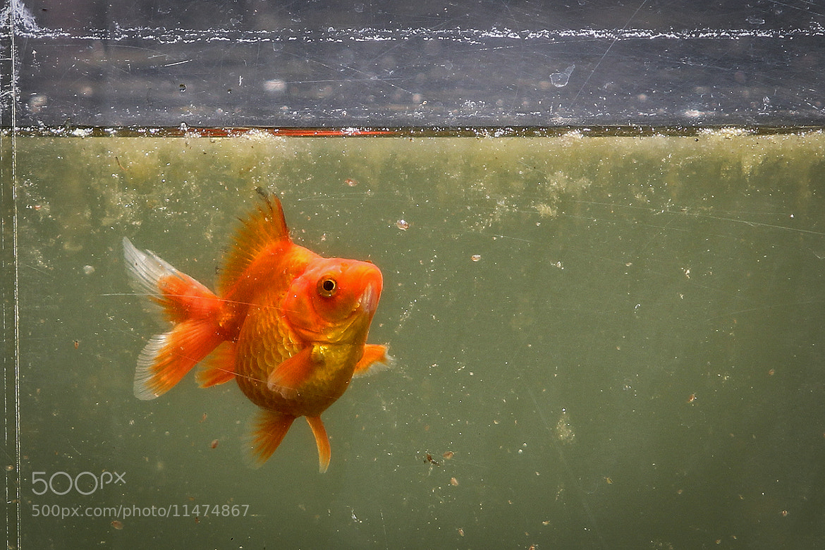 Photograph finding Nemo .... by Mathias Ahrens on 500px
