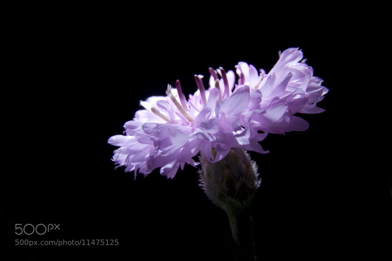 Photograph Flowers by Frozen Pixels on 500px