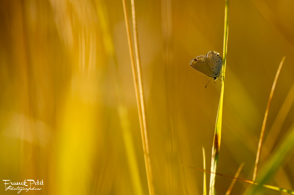 Photograph Ethereal III by Franck PETIT on 500px