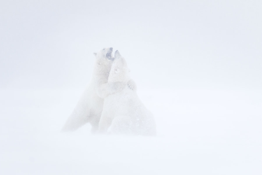Polar Embrace by Ian Plant on 500px.com