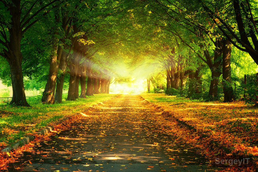 Photograph magic light and walkway in park by Sergiy Trofimov on 500px