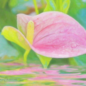 Reflecting Anthurium by Cass Peterson Greene (cassgreene)) on 500px.com