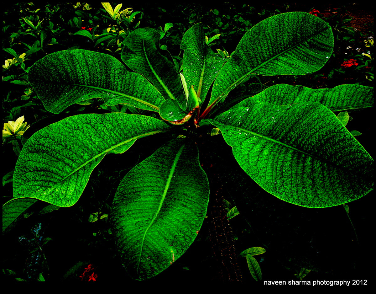 Photograph Green Beauty by naveen sharma on 500px