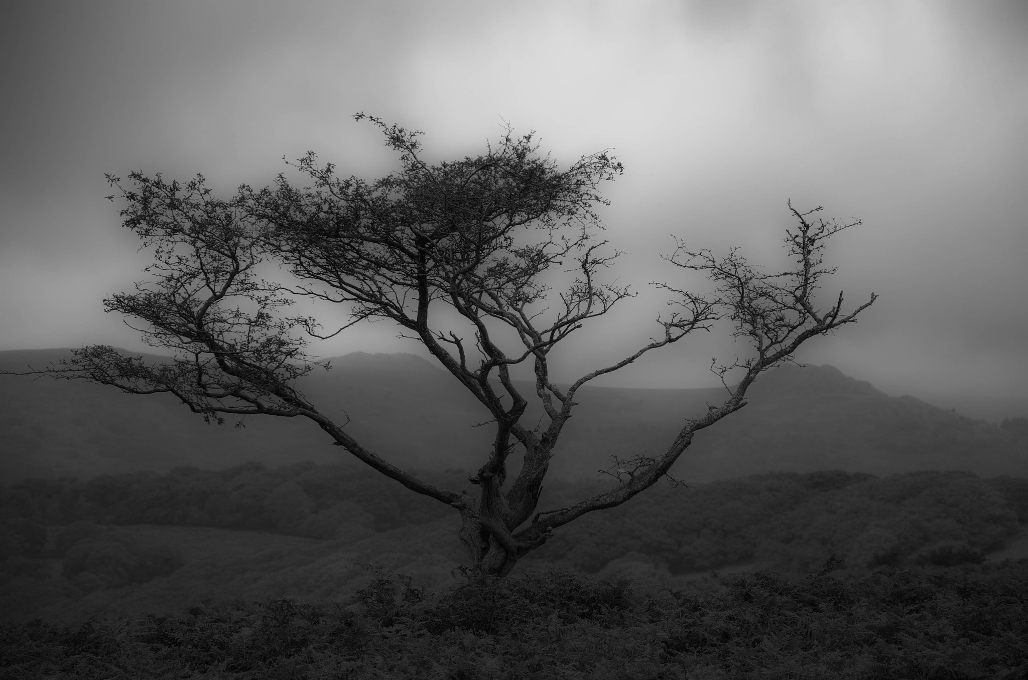 Photograph A Dartmoor Tree by julian john on 500px
