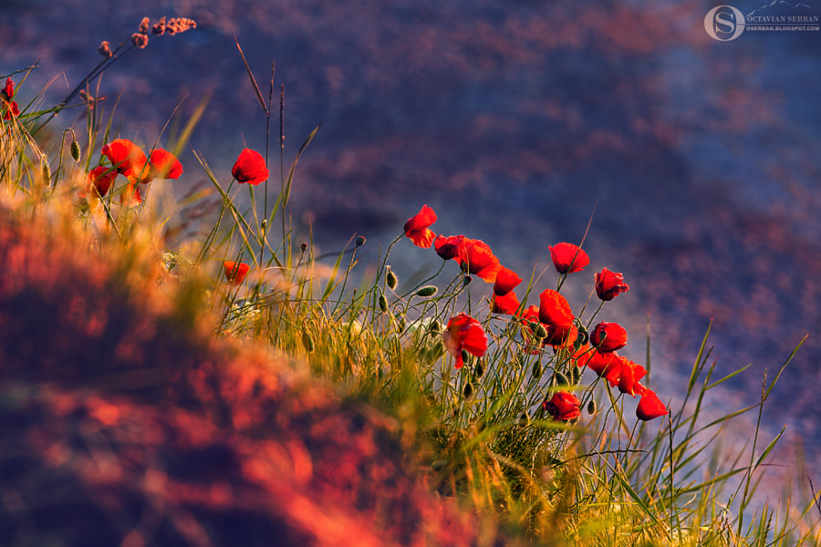 Red 2 by Octavian Serban on 500px.com