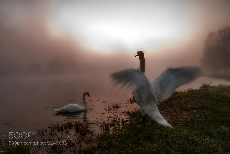 Photograph  Fog dispel by Boris Frkovic on 500px