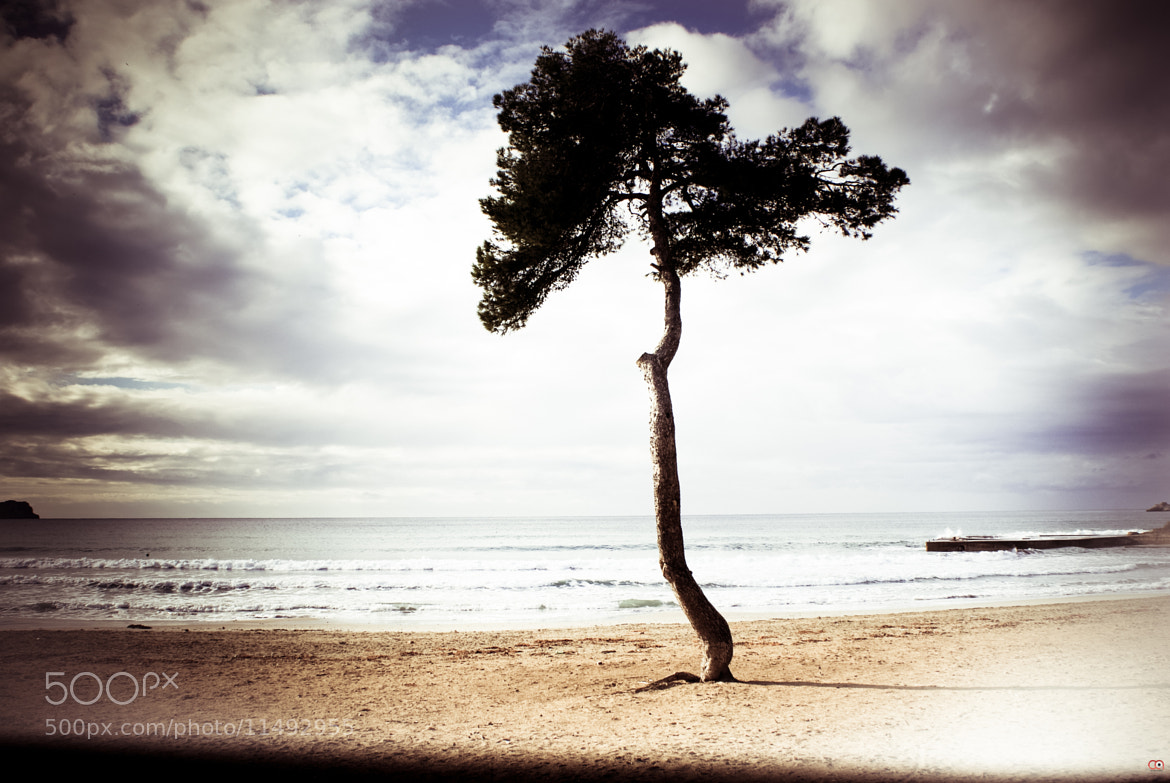 Photograph One Lonely Tree by Christina Av on 500px