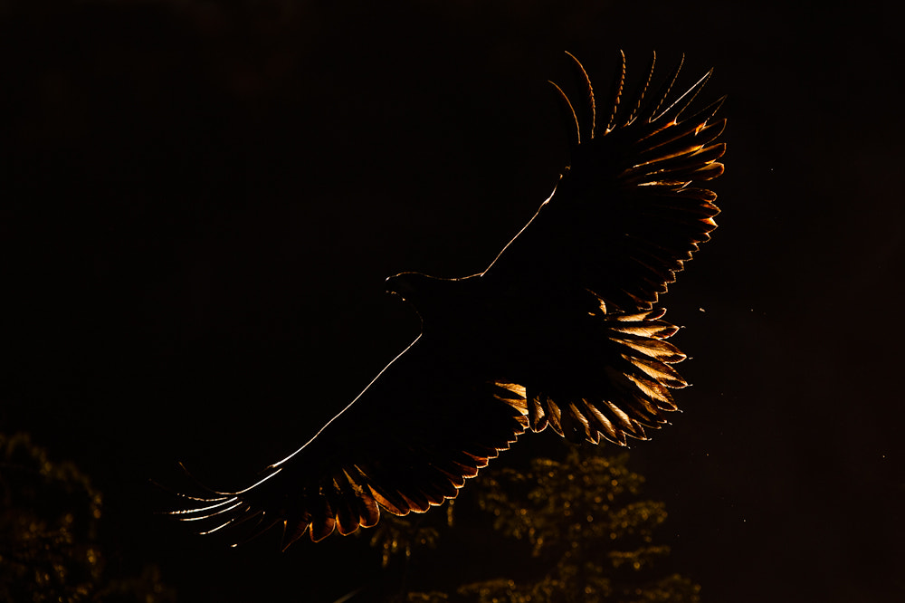Photograph White-tailed eagle by René Visser on 500px