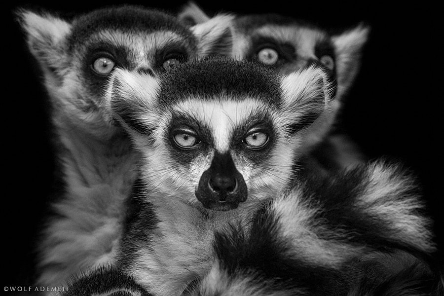 gremlins II by Wolf Ademeit on 500px.com
