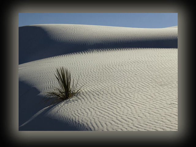 Photograph Solitude on the Dunes by Lynne Richards on 500px
