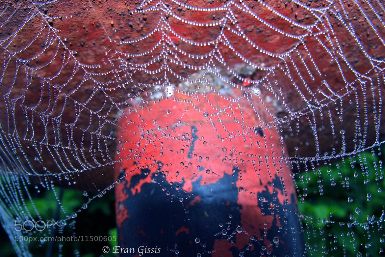 Photograph Dewy web by Eran Gissis on 500px