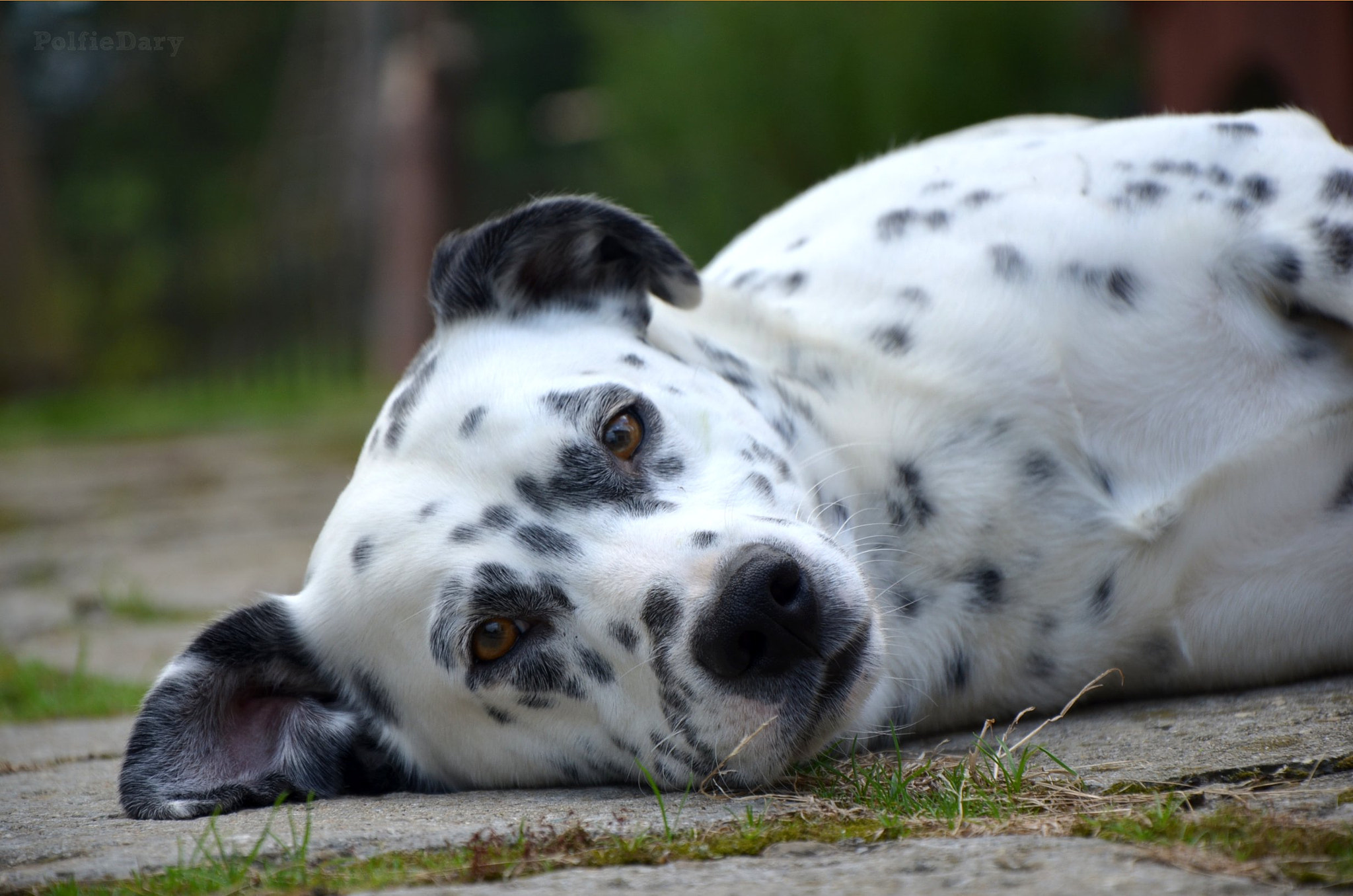 Photograph Tired dog by Anne B on 500px